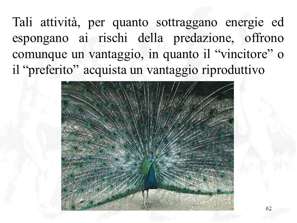 L'evoluzione62 Tali attività, per quanto sottraggano energie ed espongano ai rischi della predazione, offrono comunque un vantaggio, in quanto il vinc
