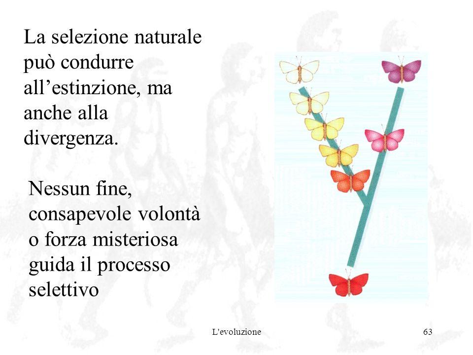 L'evoluzione63 La selezione naturale può condurre allestinzione, ma anche alla divergenza. Nessun fine, consapevole volontà o forza misteriosa guida i