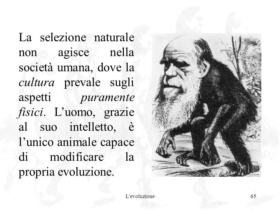 L'evoluzione65 La selezione naturale non agisce nella società umana, dove la cultura prevale sugli aspetti puramente fisici. Luomo, grazie al suo inte