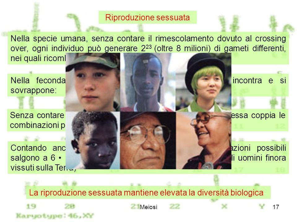 Meiosi17 Nella specie umana, senza contare il rimescolamento dovuto al crossing over, ogni individuo può generare 2 23 (oltre 8 milioni) di gameti dif