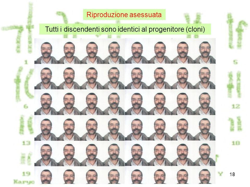 Meiosi18 Tutti i discendenti sono identici al progenitore (cloni) Riproduzione asessuata