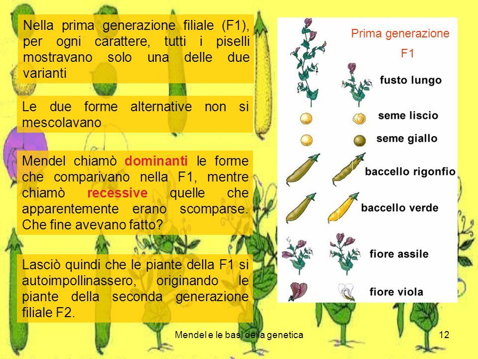 Mendel e le basi della genetica12 Nella prima generazione filiale (F1), per ogni carattere, tutti i piselli mostravano solo una delle due varianti Le due forme alternative non si mescolavano Mendel chiamò dominanti le forme che comparivano nella F1, mentre chiamò recessive quelle che apparentemente erano scomparse.