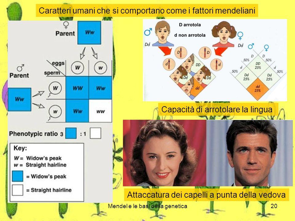 Mendel e le basi della genetica20 Caratteri umani che si comportano come i fattori mendeliani Capacità di arrotolare la lingua Attaccatura dei capelli a punta della vedova
