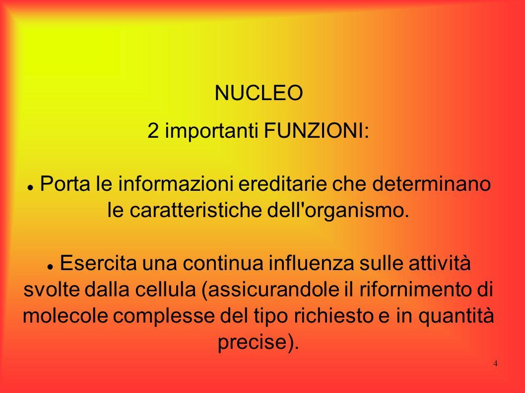4 NUCLEO 2 importanti FUNZIONI: Porta le informazioni ereditarie che determinano le caratteristiche dell'organismo. Esercita una continua influenza su