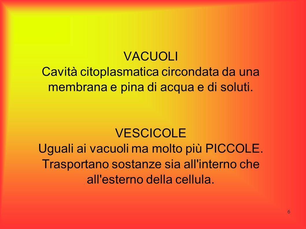 6 VACUOLI Cavità citoplasmatica circondata da una membrana e pina di acqua e di soluti. VESCICOLE Uguali ai vacuoli ma molto più PICCOLE. Trasportano