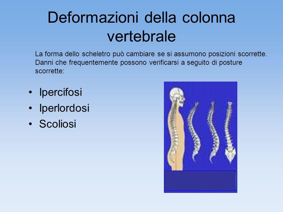 Deformazioni della colonna vertebrale Ipercifosi Iperlordosi Scoliosi La forma dello scheletro può cambiare se si assumono posizioni scorrette.