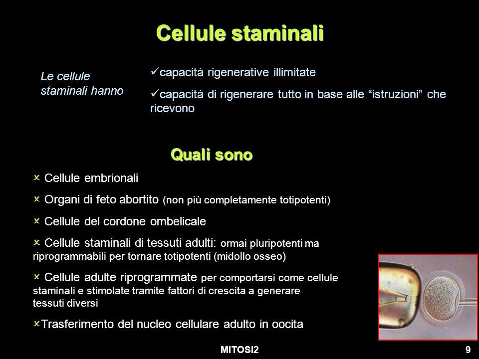MITOSI210 cellule embrionali Le cellule staminali ottimali sono le cellule embrionali ma… Embrione è un essere vivente.