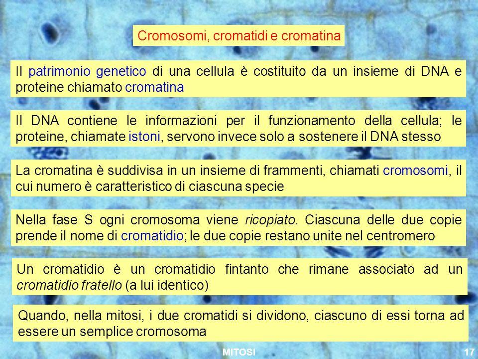 MITOSI17 Cromosomi, cromatidi e cromatina Il patrimonio genetico di una cellula è costituito da un insieme di DNA e proteine chiamato cromatina La cro