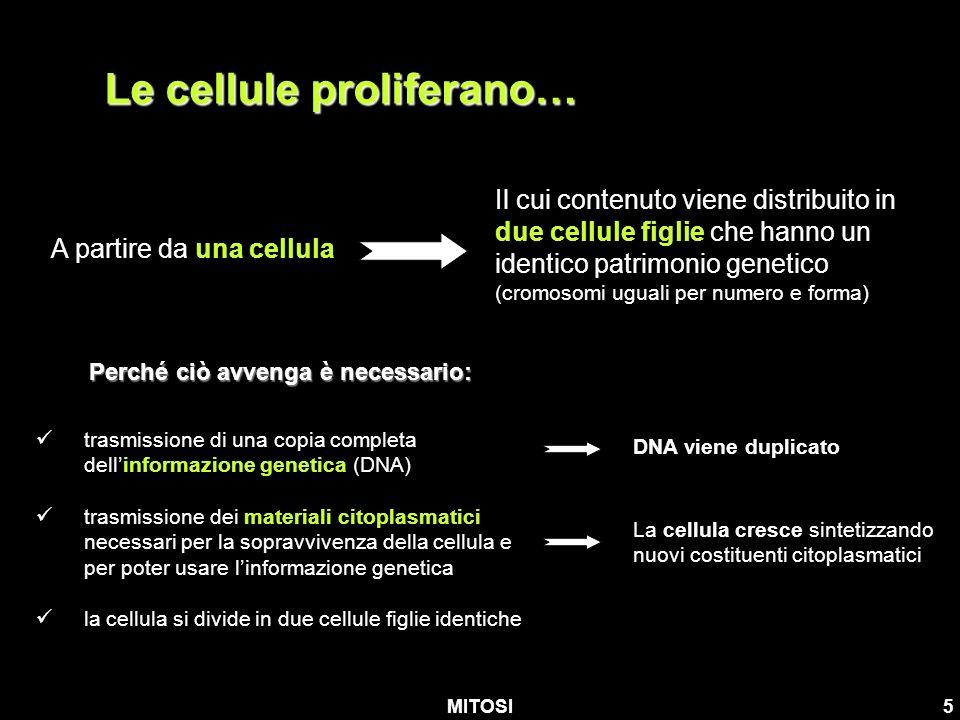 MITOSI5 Le cellule proliferano… trasmissione di una copia completa dellinformazione genetica (DNA) trasmissione dei materiali citoplasmatici necessari