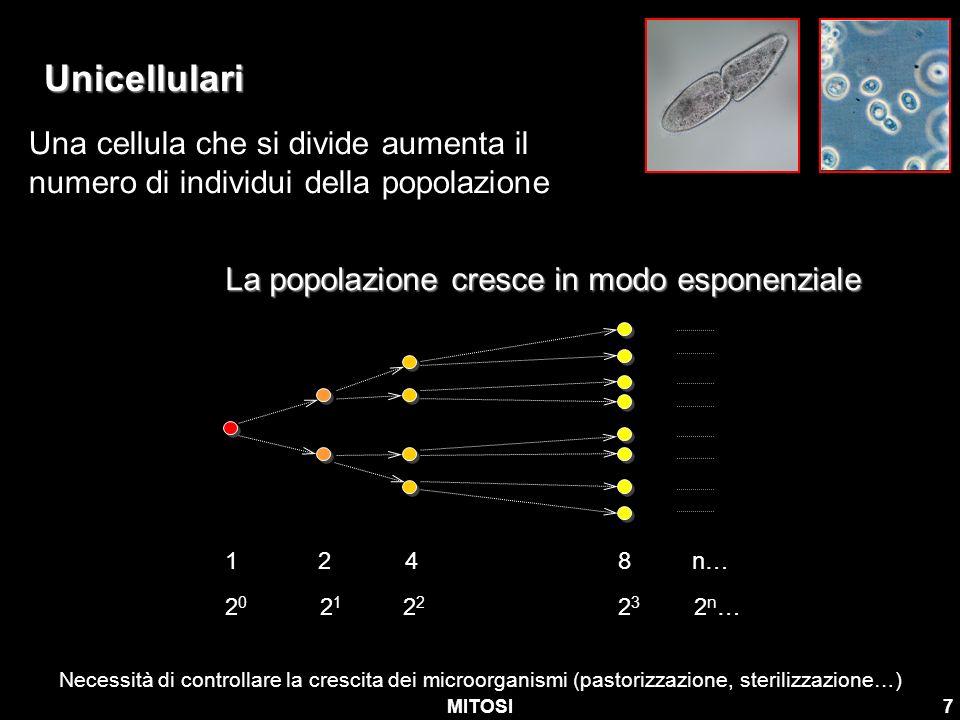 MITOSI7 Unicellulari Una cellula che si divide aumenta il numero di individui della popolazione La popolazione cresce in modo esponenziale 2 0 2 1 2 2