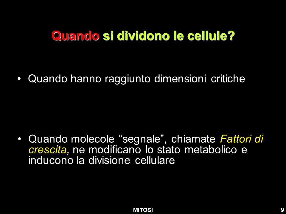 MITOSI9 Quando si dividono le cellule? Quando hanno raggiunto dimensioni critiche Quando molecole segnale, chiamate Fattori di crescita, ne modificano