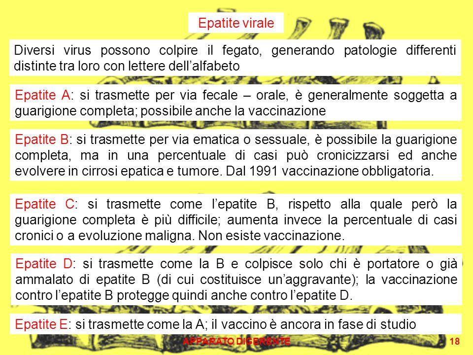 APPARATO DIGERENTE18 Epatite C: si trasmette come lepatite B, rispetto alla quale però la guarigione completa è più difficile; aumenta invece la perce