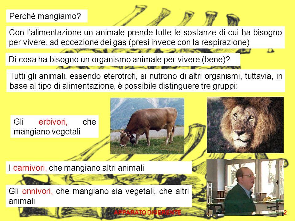 APPARATO DIGERENTE2 Perché mangiamo? Con lalimentazione un animale prende tutte le sostanze di cui ha bisogno per vivere, ad eccezione dei gas (presi