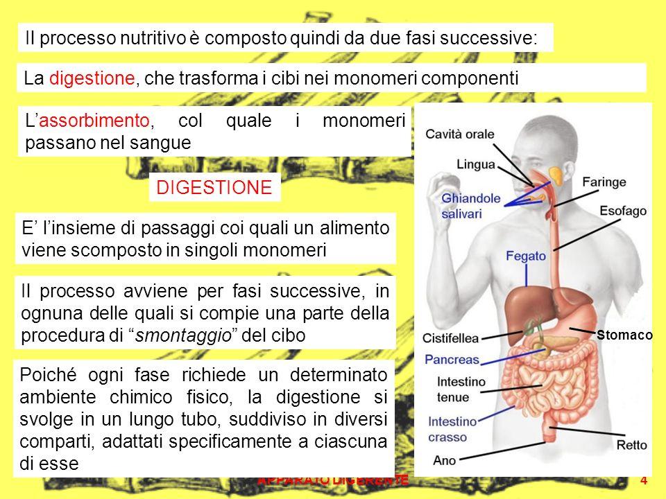 APPARATO DIGERENTE4 E linsieme di passaggi coi quali un alimento viene scomposto in singoli monomeri DIGESTIONE Il processo avviene per fasi successiv