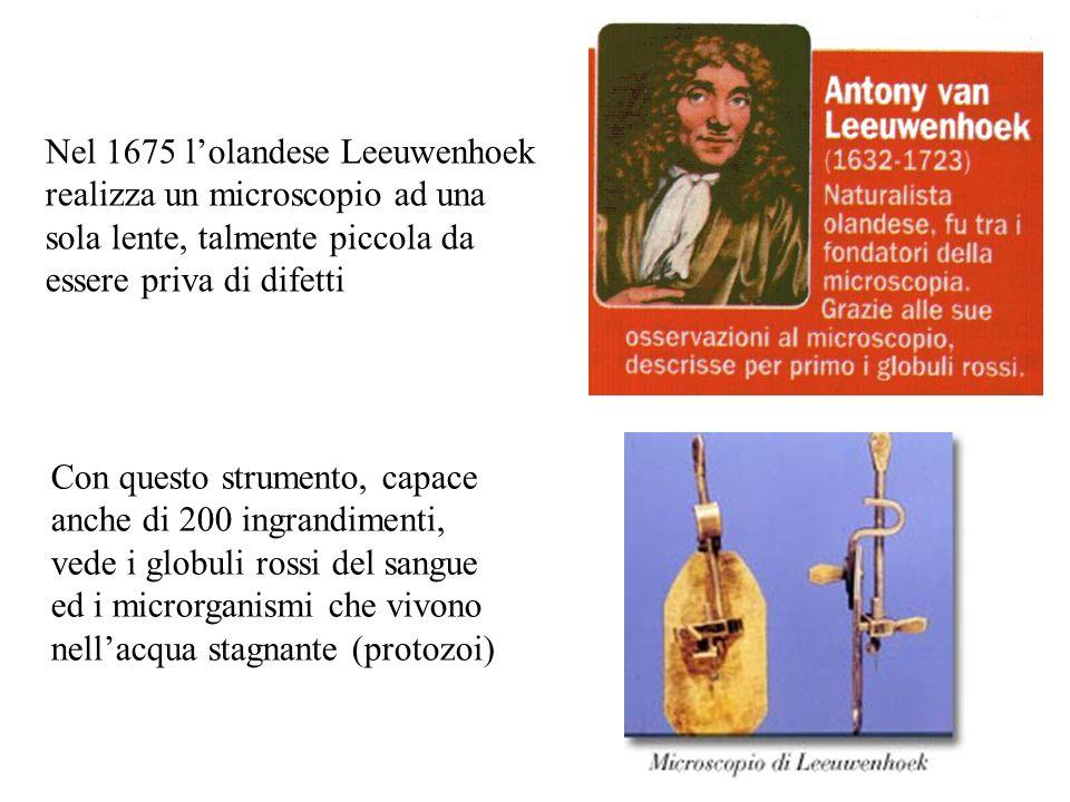 Nel 1675 lolandese Leeuwenhoek realizza un microscopio ad una sola lente, talmente piccola da essere priva di difetti Con questo strumento, capace anc