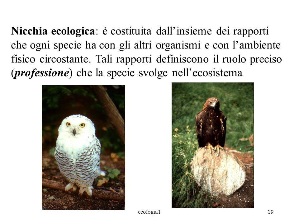 ecologia119 Nicchia ecologica: è costituita dallinsieme dei rapporti che ogni specie ha con gli altri organismi e con lambiente fisico circostante.