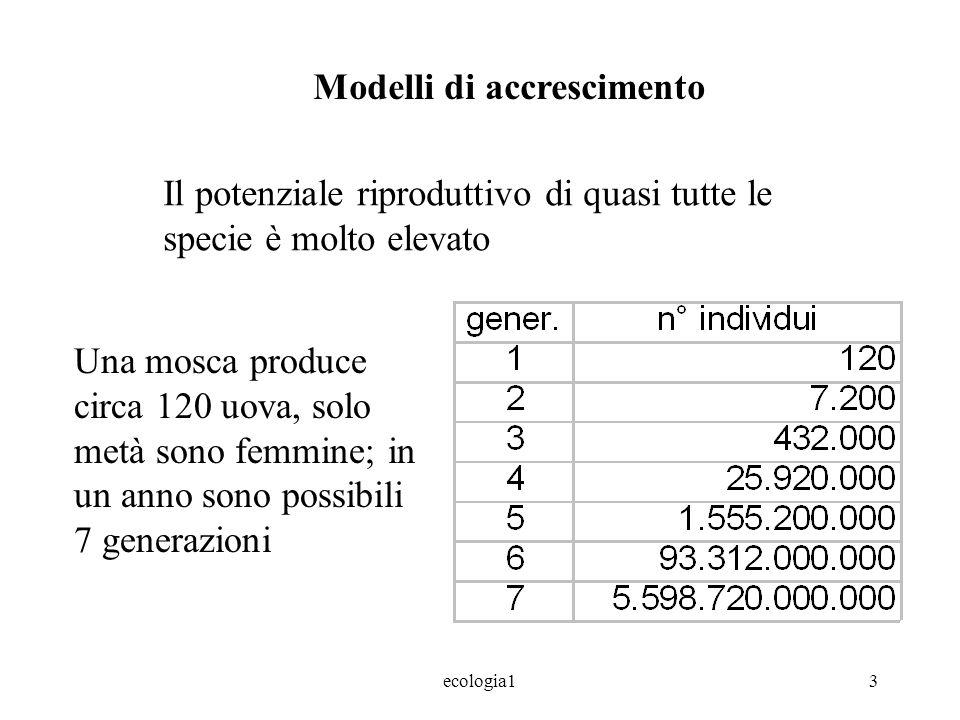 ecologia13 Modelli di accrescimento Il potenziale riproduttivo di quasi tutte le specie è molto elevato Una mosca produce circa 120 uova, solo metà sono femmine; in un anno sono possibili 7 generazioni