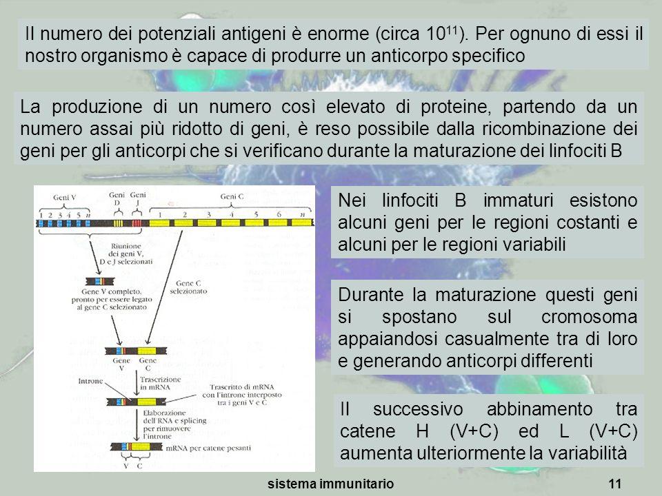 sistema immunitario11 La produzione di un numero così elevato di proteine, partendo da un numero assai più ridotto di geni, è reso possibile dalla ric