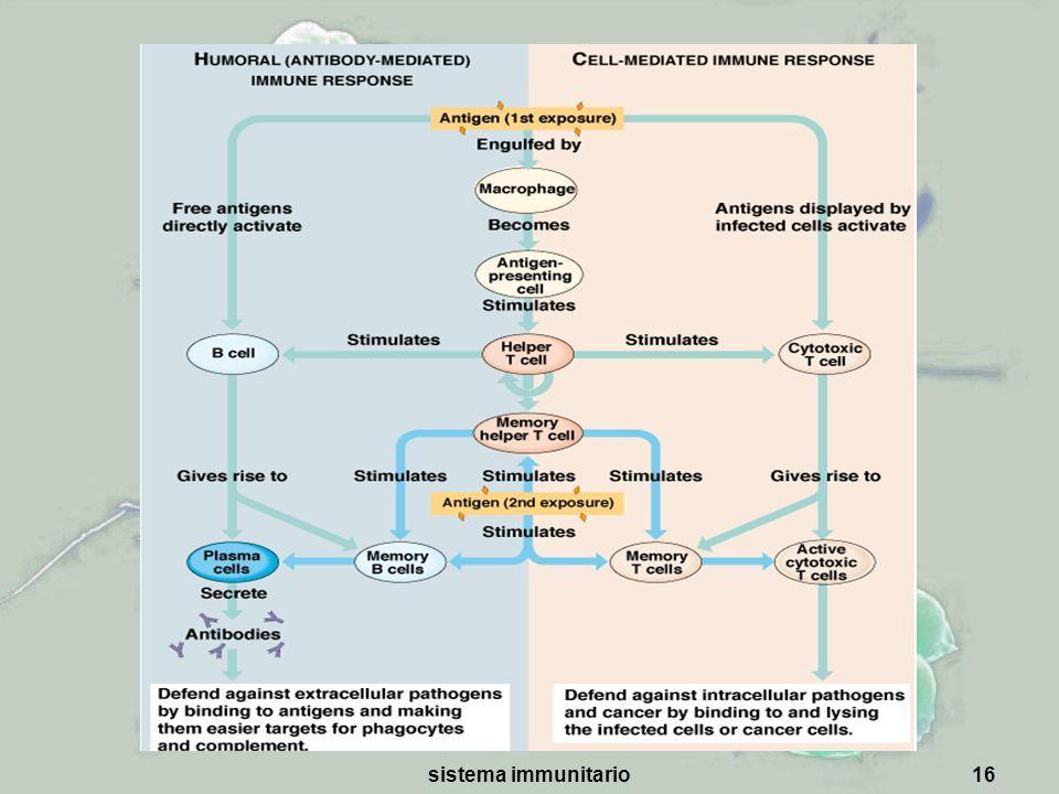 sistema immunitario16