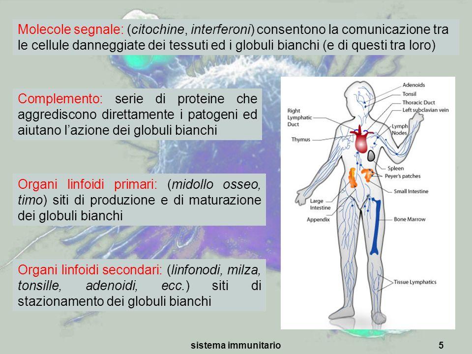 sistema immunitario5 Molecole segnale: (citochine, interferoni) consentono la comunicazione tra le cellule danneggiate dei tessuti ed i globuli bianch