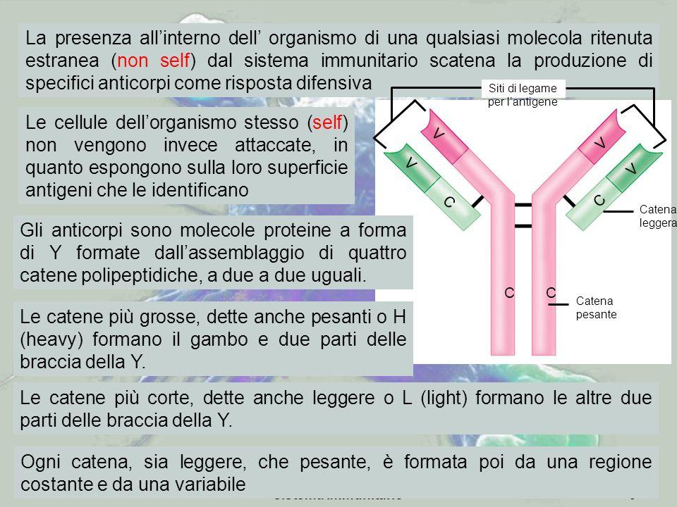 sistema immunitario9 Le cellule dellorganismo stesso (self) non vengono invece attaccate, in quanto espongono sulla loro superficie antigeni che le id