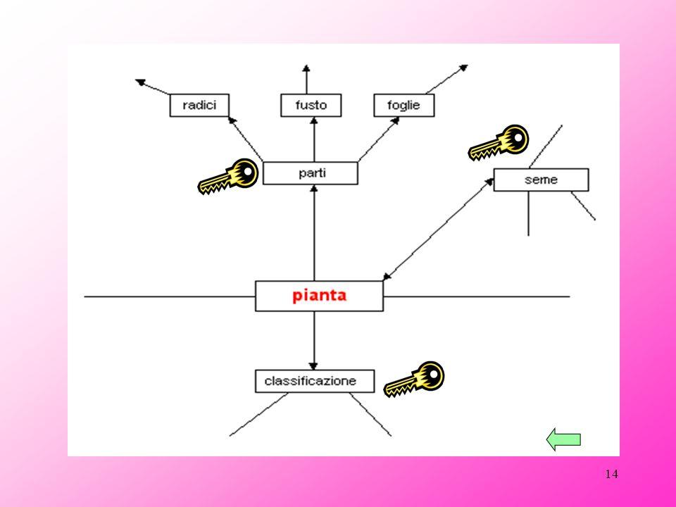 13 Ciascuna idea - chiave racchiude delle informazioni collegate che devo indicare nella mappa (ad esempio, le parti della pianta, che sono tre, vanno