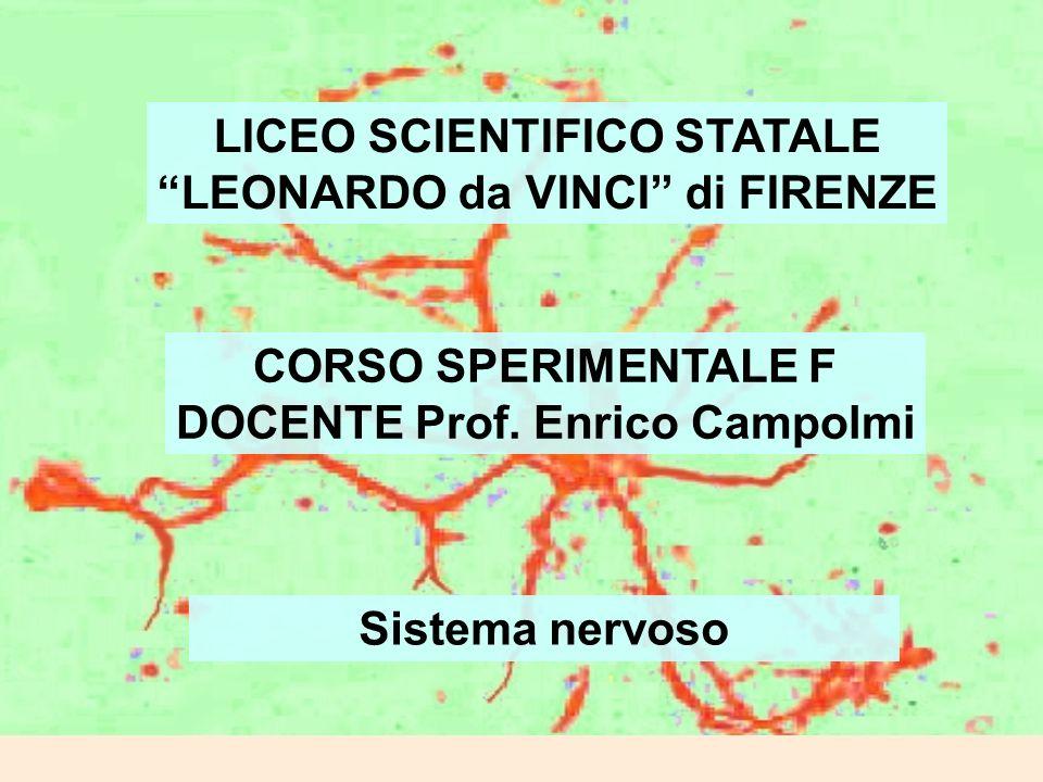 LICEO SCIENTIFICO STATALE LEONARDO da VINCI di FIRENZE CORSO SPERIMENTALE F DOCENTE Prof. Enrico Campolmi Sistema nervoso