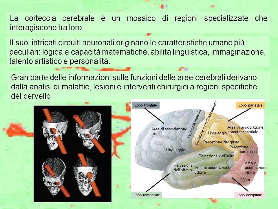 Gran parte delle informazioni sulle funzioni delle aree cerebrali derivano dalla analisi di malattie, lesioni e interventi chirurgici a regioni specif