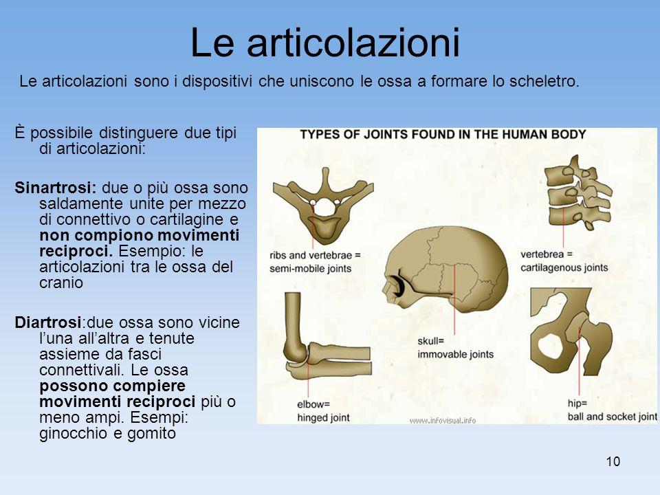 10 Le articolazioni È possibile distinguere due tipi di articolazioni: Sinartrosi: due o più ossa sono saldamente unite per mezzo di connettivo o cart