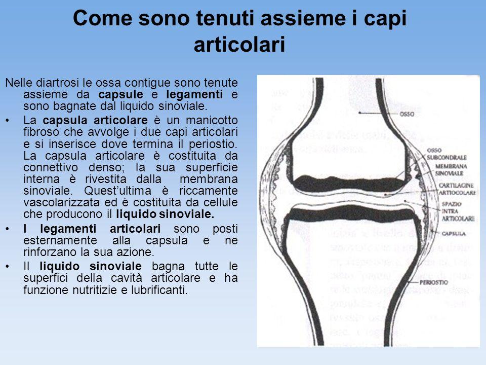 11 Come sono tenuti assieme i capi articolari Nelle diartrosi le ossa contigue sono tenute assieme da capsule e legamenti e sono bagnate dal liquido s