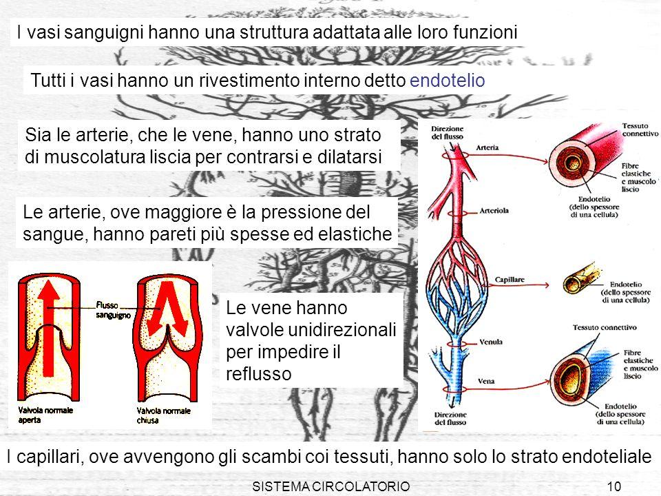 SISTEMA CIRCOLATORIO10 I vasi sanguigni hanno una struttura adattata alle loro funzioni Le arterie, ove maggiore è la pressione del sangue, hanno pare
