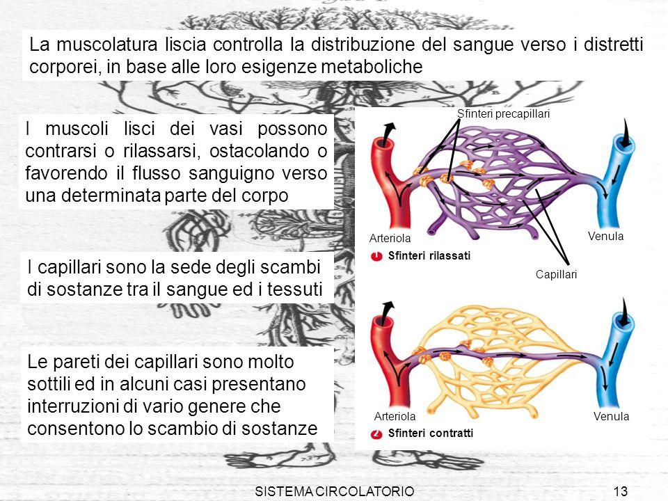 SISTEMA CIRCOLATORIO13 VenulaArteriola Venula Arteriola Sfinteri precapillari Capillari 1 2 Sfinteri rilassati Sfinteri contratti La muscolatura lisci