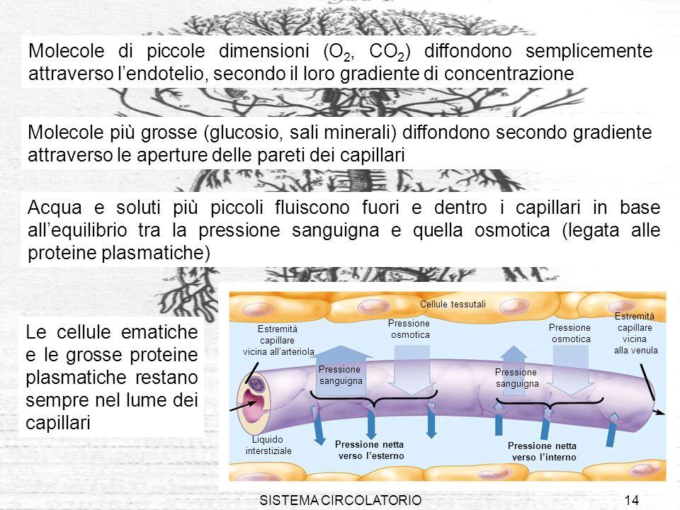 SISTEMA CIRCOLATORIO14 Molecole di piccole dimensioni (O 2, CO 2 ) diffondono semplicemente attraverso lendotelio, secondo il loro gradiente di concen