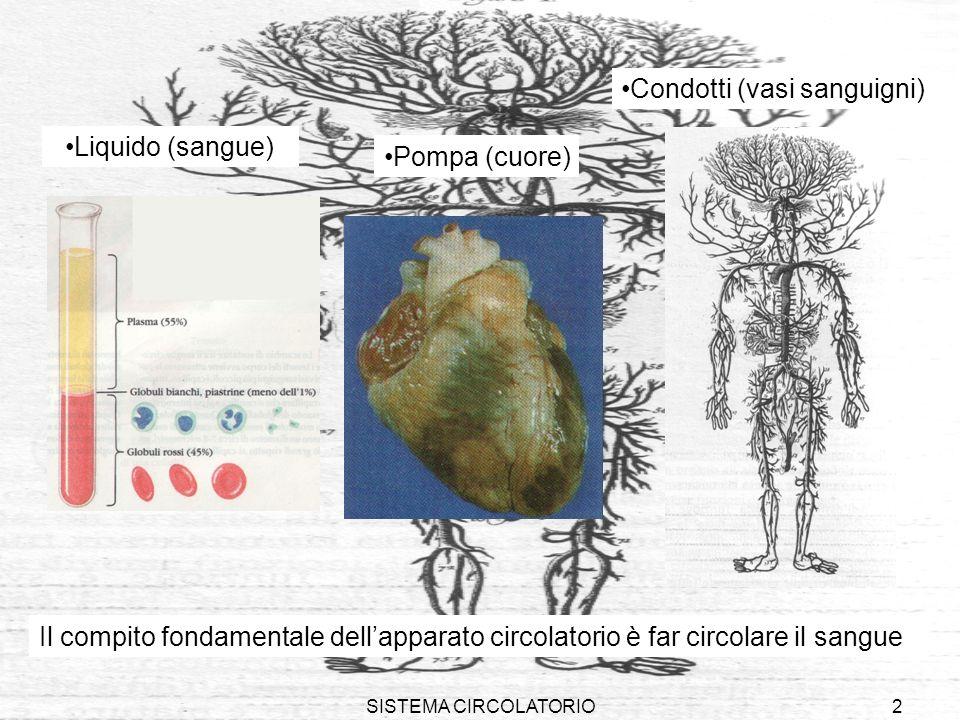 SISTEMA CIRCOLATORIO2 Condotti (vasi sanguigni) Liquido (sangue) Pompa (cuore) Il compito fondamentale dellapparato circolatorio è far circolare il sa