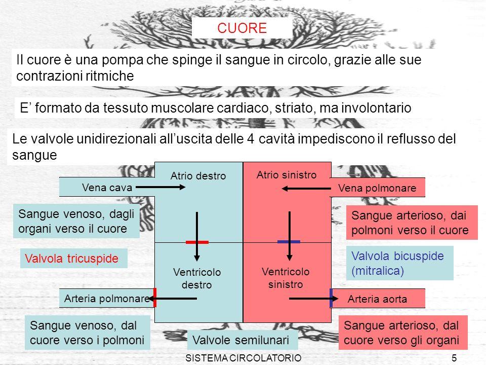 SISTEMA CIRCOLATORIO5 Le valvole unidirezionali alluscita delle 4 cavità impediscono il reflusso del sangue CUORE Il cuore è una pompa che spinge il s