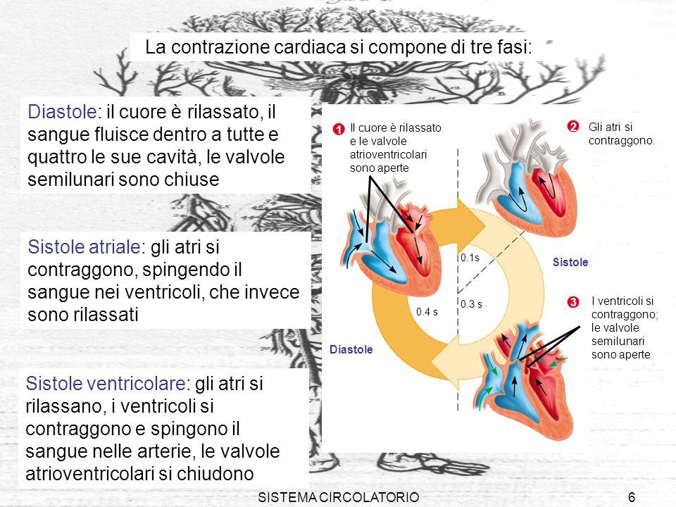 SISTEMA CIRCOLATORIO6 La contrazione cardiaca si compone di tre fasi: Sistole ventricolare: gli atri si rilassano, i ventricoli si contraggono e sping