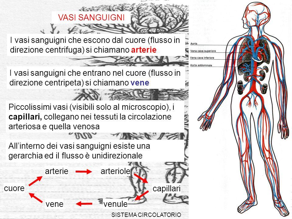SISTEMA CIRCOLATORIO9 VASI SANGUIGNI I vasi sanguigni che escono dal cuore (flusso in direzione centrifuga) si chiamano arterie I vasi sanguigni che e