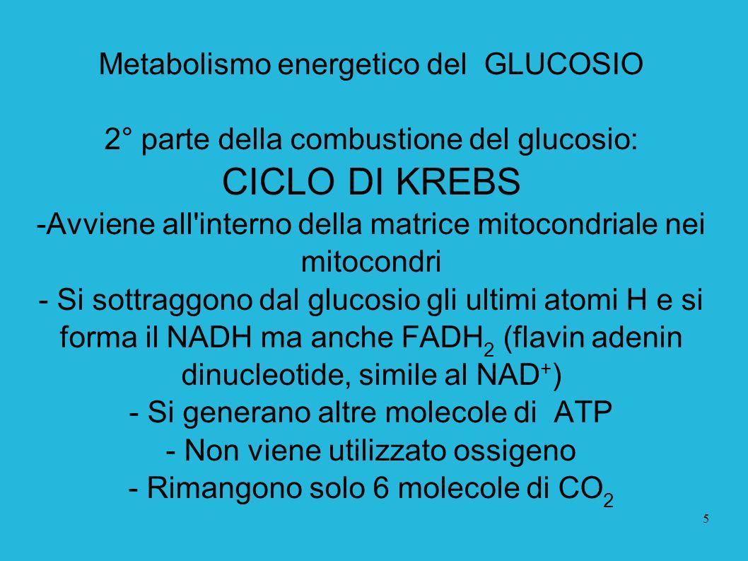 5 Metabolismo energetico del GLUCOSIO 2° parte della combustione del glucosio: CICLO DI KREBS -Avviene all'interno della matrice mitocondriale nei mit