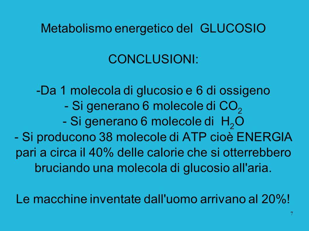 7 Metabolismo energetico del GLUCOSIO CONCLUSIONI: -Da 1 molecola di glucosio e 6 di ossigeno - Si generano 6 molecole di CO 2 - Si generano 6 molecol