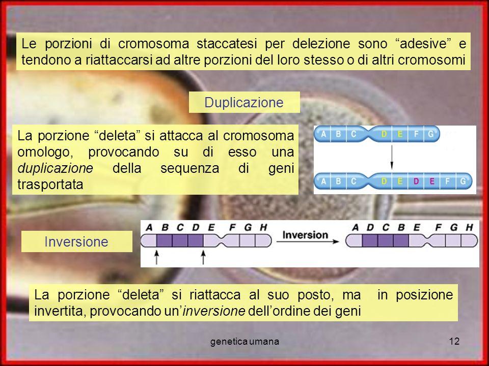 genetica umana12 Le porzioni di cromosoma staccatesi per delezione sono adesive e tendono a riattaccarsi ad altre porzioni del loro stesso o di altri