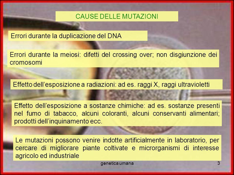 genetica umana3 CAUSE DELLE MUTAZIONI Errori durante la duplicazione del DNA Errori durante la meiosi: difetti del crossing over; non disgiunzione dei