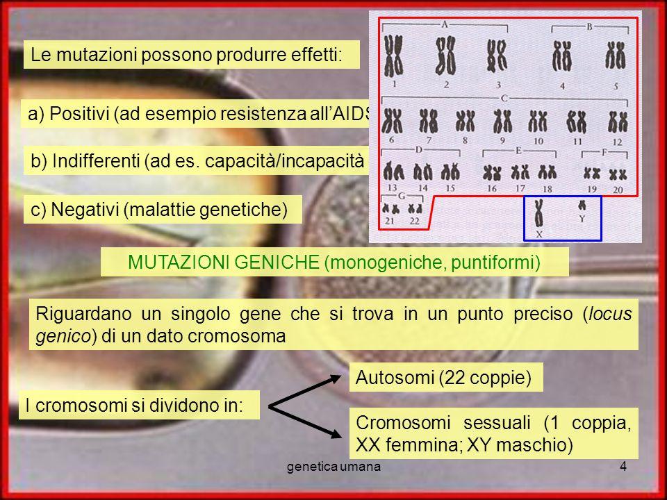 genetica umana4 Le mutazioni possono produrre effetti: a) Positivi (ad esempio resistenza allAIDS, gene A1 Milano) b) Indifferenti (ad es. capacità/in