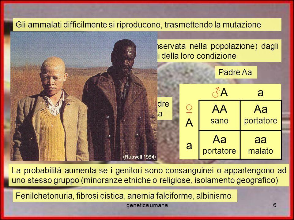 genetica umana6 Gli ammalati difficilmente si riproducono, trasmettendo la mutazione La mutazione viene trasmessa (e conservata nella popolazione) dag