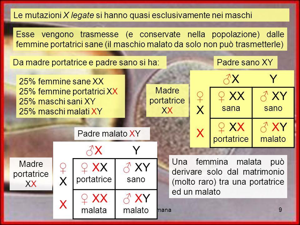 genetica umana9 Le mutazioni X legate si hanno quasi esclusivamente nei maschi Esse vengono trasmesse (e conservate nella popolazione) dalle femmine p