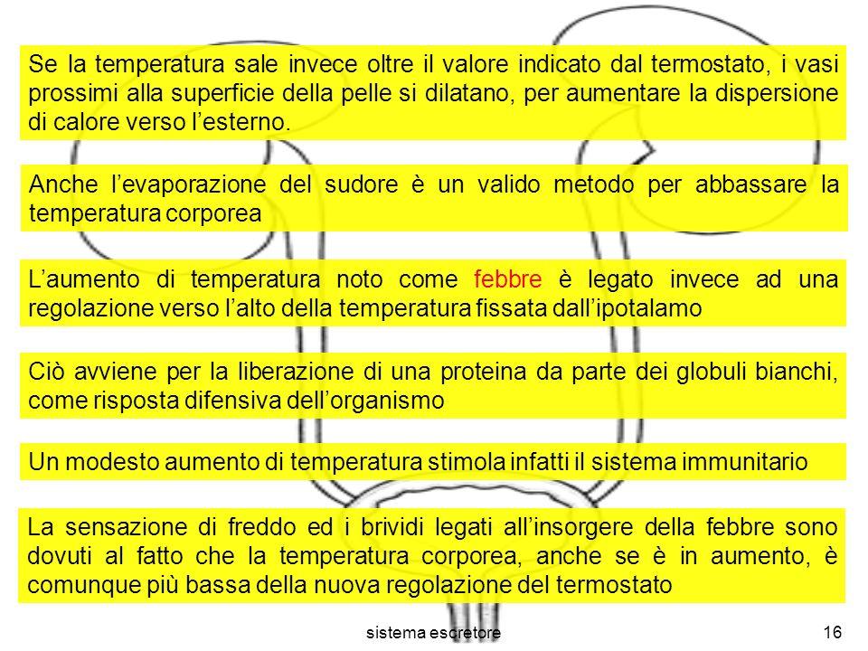 sistema escretore16 Se la temperatura sale invece oltre il valore indicato dal termostato, i vasi prossimi alla superficie della pelle si dilatano, pe