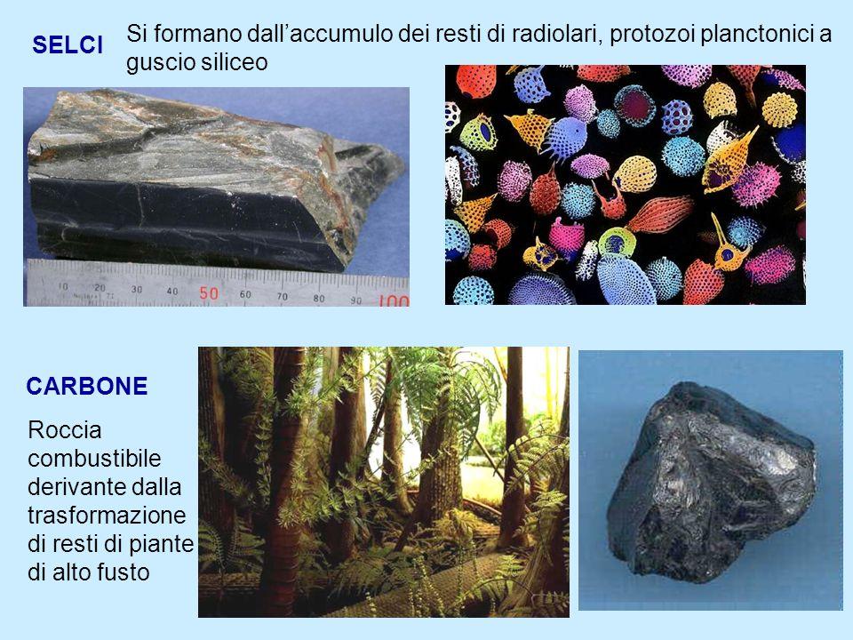 4 SELCI Si formano dallaccumulo dei resti di radiolari, protozoi planctonici a guscio siliceo CARBONE Roccia combustibile derivante dalla trasformazione di resti di piante di alto fusto