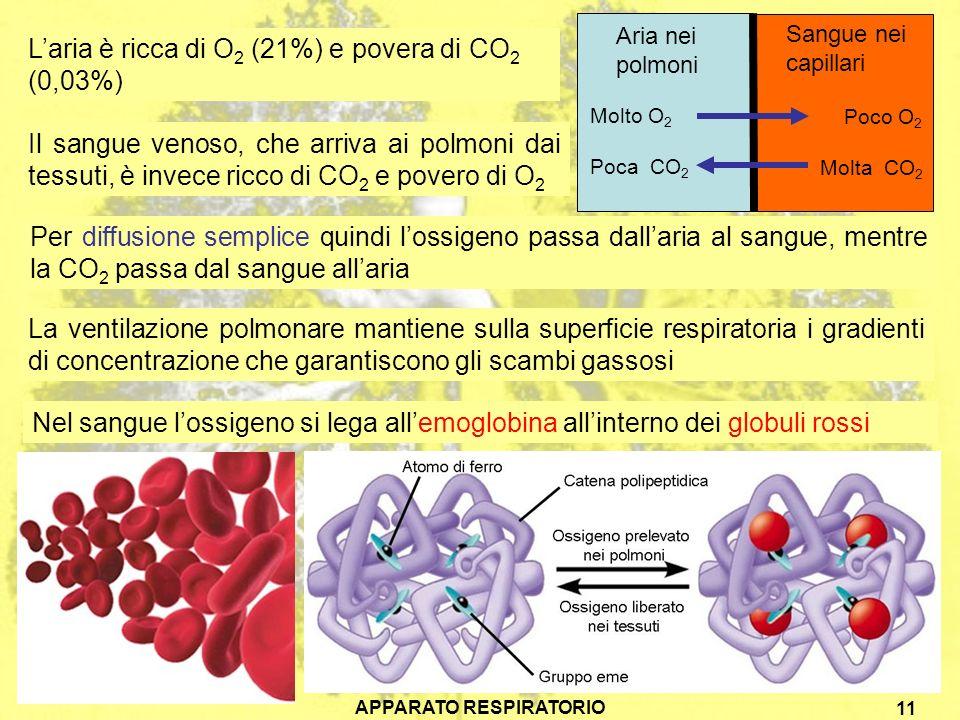 APPARATO RESPIRATORIO 11 Laria è ricca di O 2 (21%) e povera di CO 2 (0,03%) Il sangue venoso, che arriva ai polmoni dai tessuti, è invece ricco di CO 2 e povero di O 2 Per diffusione semplice quindi lossigeno passa dallaria al sangue, mentre la CO 2 passa dal sangue allaria Aria nei polmoni Molto O 2 Poca CO 2 Sangue nei capillari Poco O 2 Molta CO 2 La ventilazione polmonare mantiene sulla superficie respiratoria i gradienti di concentrazione che garantiscono gli scambi gassosi Nel sangue lossigeno si lega allemoglobina allinterno dei globuli rossi