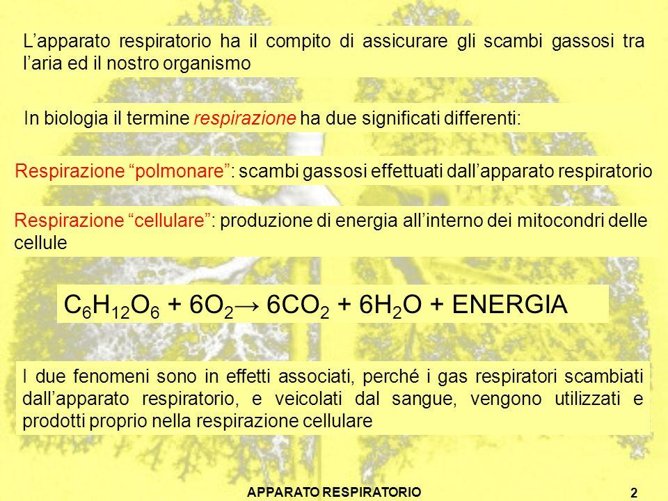 APPARATO RESPIRATORIO 3 O2O2 CO 2 Polmone Sistema circolatorio 2 Trasporto di gas tramite il sistema circolatorio 3 Scambi gassosi tra sangue e tessuti Capillari Cellula CO 2 O2O2 Mitocondri 1 Scambi gassosi tra aria e sangue Nei vertebrati lo scambio dei gas avviene quindi in tre fasi: