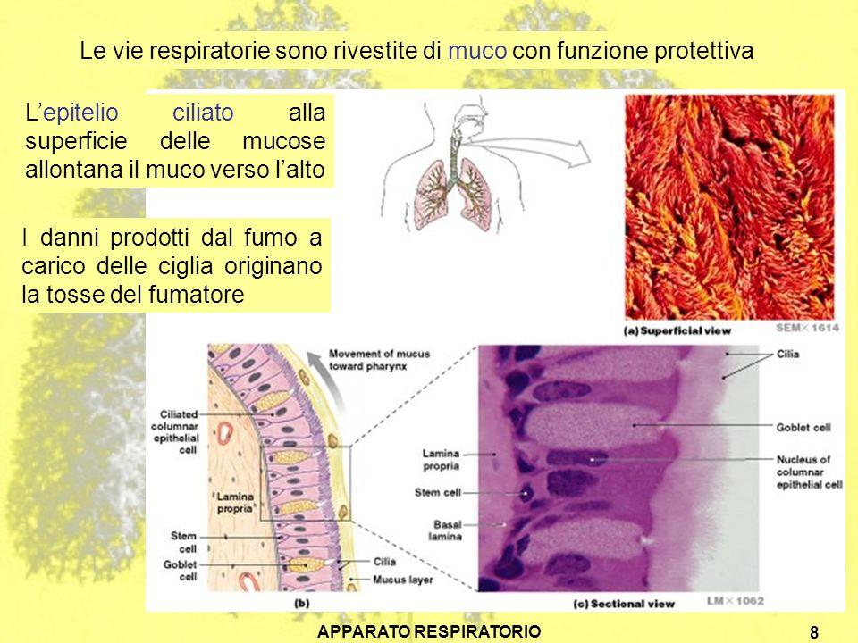 APPARATO RESPIRATORIO 8 Le vie respiratorie sono rivestite di muco con funzione protettiva Lepitelio ciliato alla superficie delle mucose allontana il muco verso lalto I danni prodotti dal fumo a carico delle ciglia originano la tosse del fumatore
