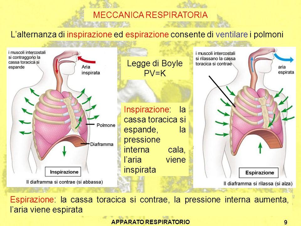 APPARATO RESPIRATORIO 10 SCAMBI GASSOSI La presenza nei polmoni delle numerosissime cavità alveolari porta la superficie di scambio tra aria e sangue a circa 70 m 2 Lenfisema, provocando la fusione di alveoli adiacenti, riduce la superficie respiratoria, rendendo la respirazione meno efficiente Nei polmoni gli scambi gassosi tra aria e sangue avvengono attraverso la superficie interna umida e vascolarizzata
